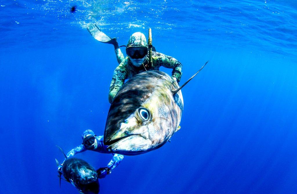 Картинки подводная охота